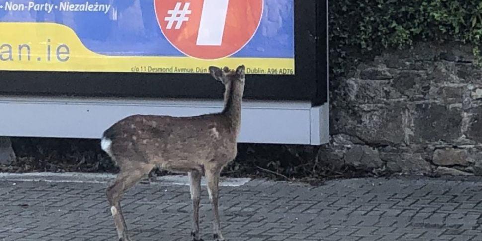 Deer Cause Of Train Delays In...