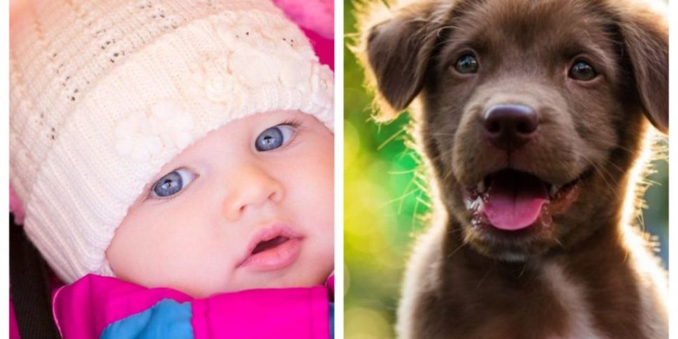 Most Popular Dog & Baby Names...