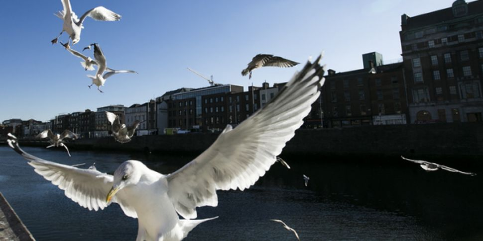 Seagulls Missing From City Str...