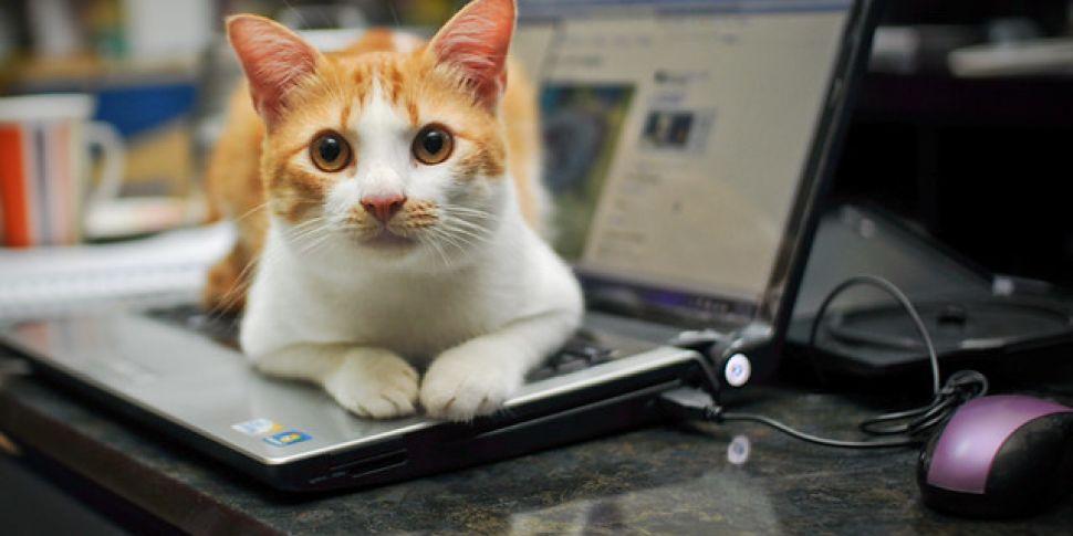 A Virtual Cat Fair Is Happenin...