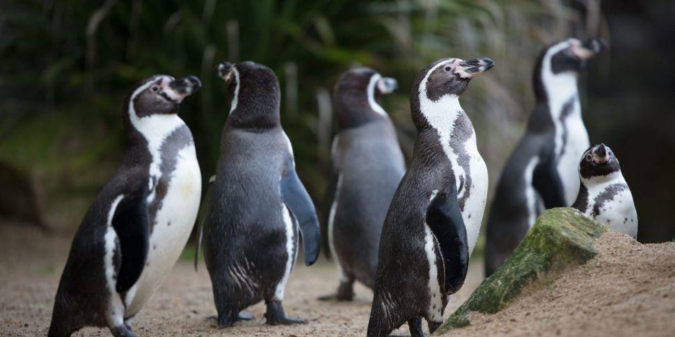 Dublin Zoo Has Workbooks & Oth...