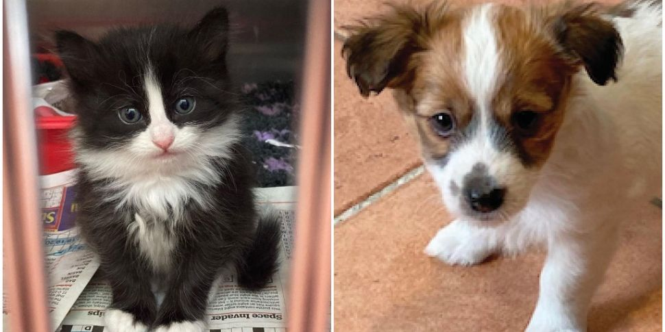 The DSPCA Are Opening Adoption...