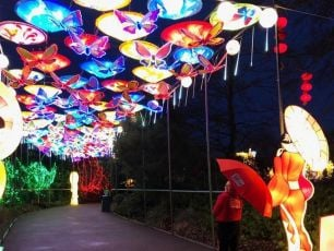 Wind Warning Forces Dublin Zoo To Cancel Wild Lights Again