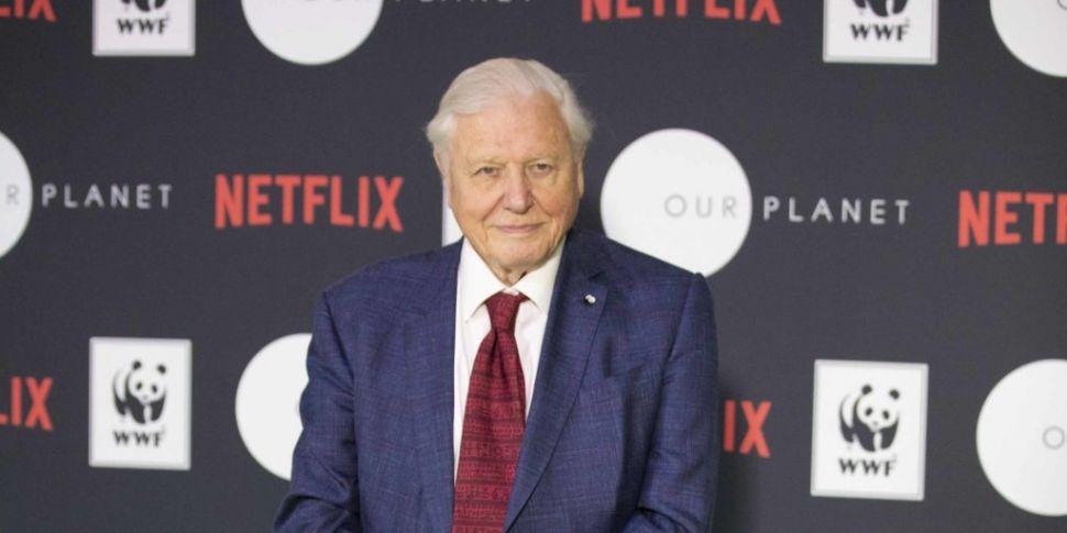 David Attenborough's Netflix S...