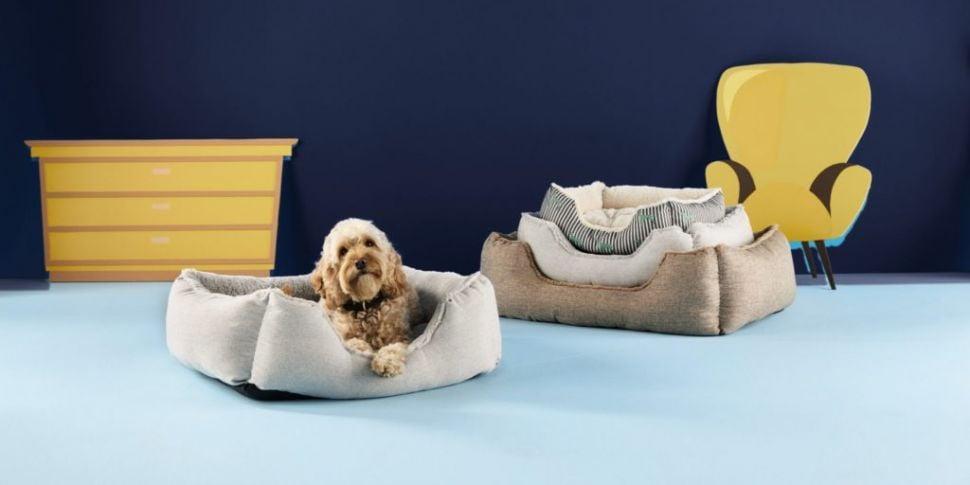 Check Out Aldi's New Pet Colle...