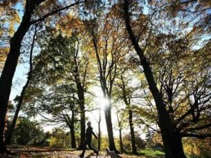 Phoenix Park Named Top Picnic...