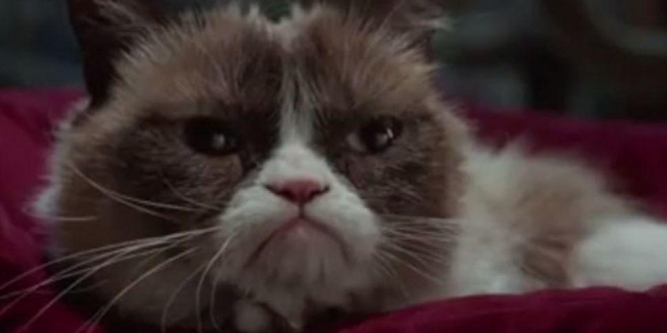 Trailer: Grumpy Cat's Worst Christmas Ever TV Movie