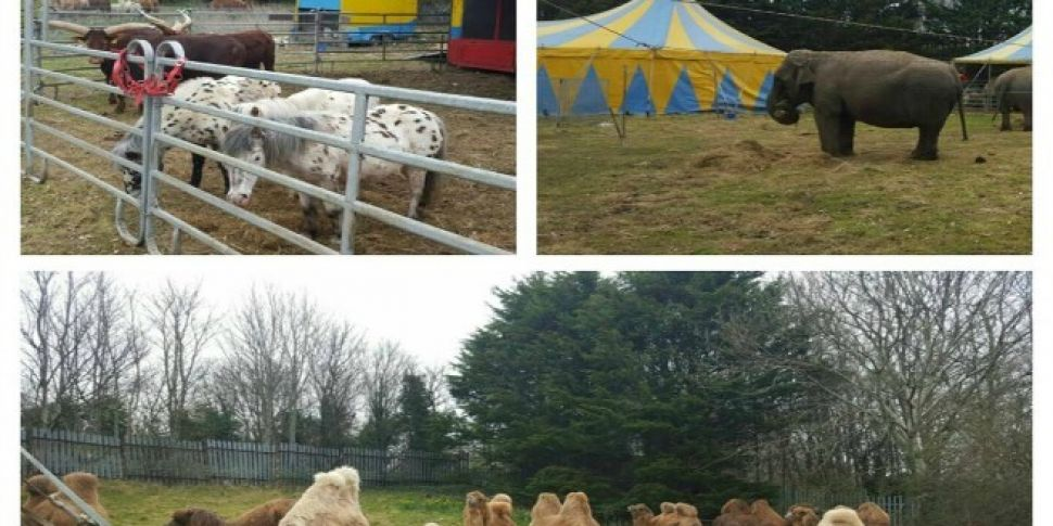 War On Air Over The Circus In...