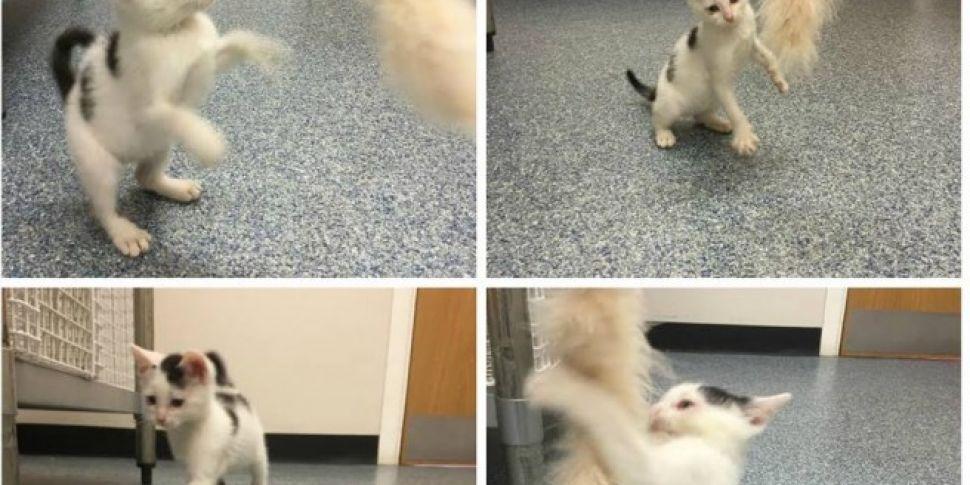Clonsilla Cat Clinic Seeks Kit...