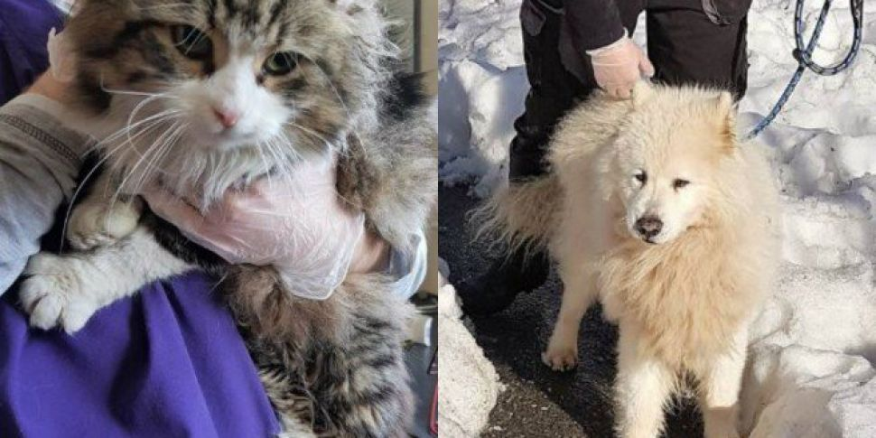 Recognise Any Of These Pets Found Since Storm Emma?