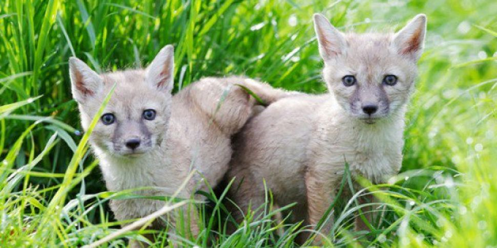 Tayto Park Wants To Keep Zoo D...