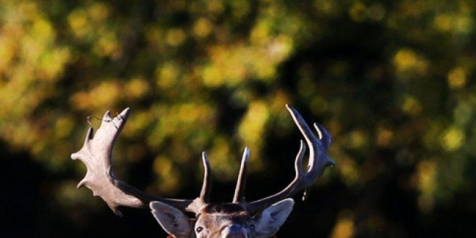 Deer Shot Dead At Children&#39...