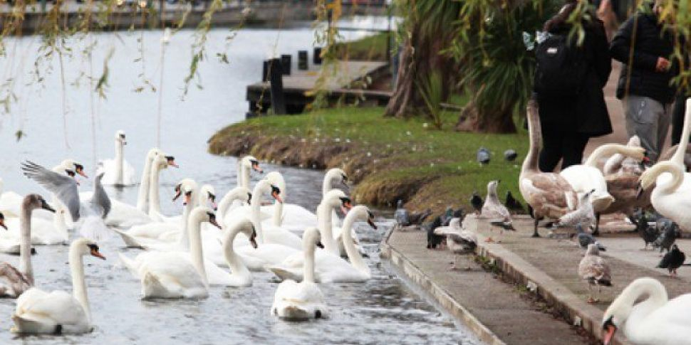 Concerns About Canal Litter After Sunny Days