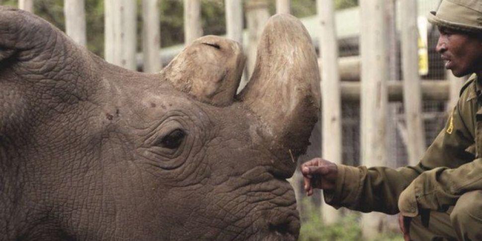 World's Last Male Northern White Rhino Dies