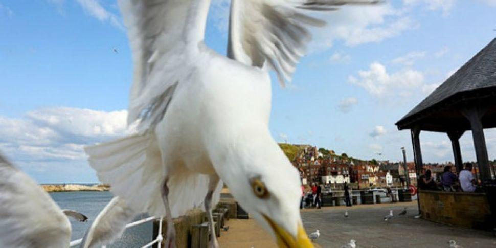Seagulls Are Terrorising Peopl...