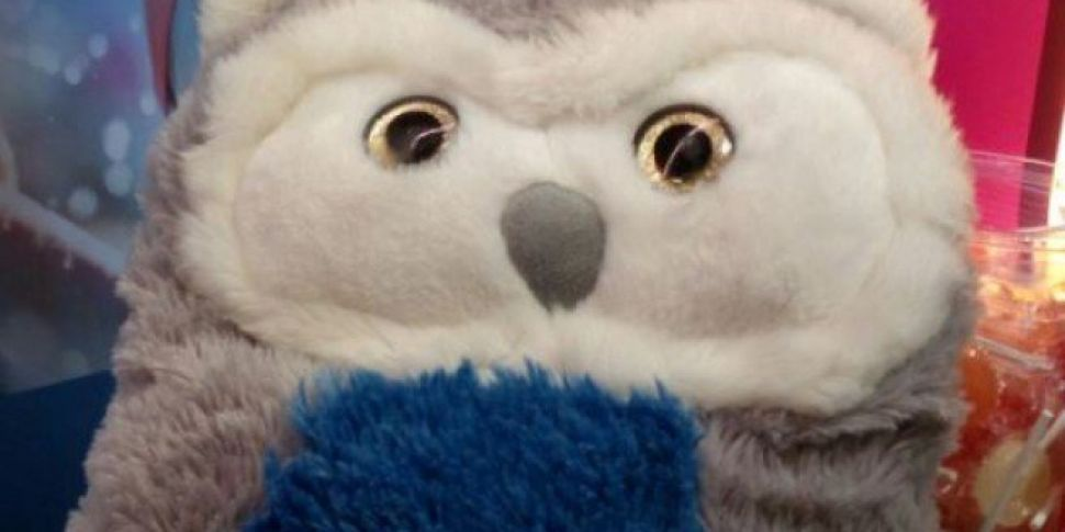 Children's Hospital Wants To Reunite Lost Owl With Owner