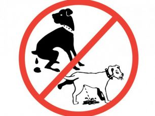 The Dog Poo Ad Remixed By 98FM's Big Breakfast