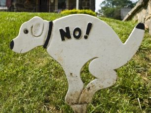 Cooper & Luke Chat To The Woman Who Wrote The Dog Poo Jingle