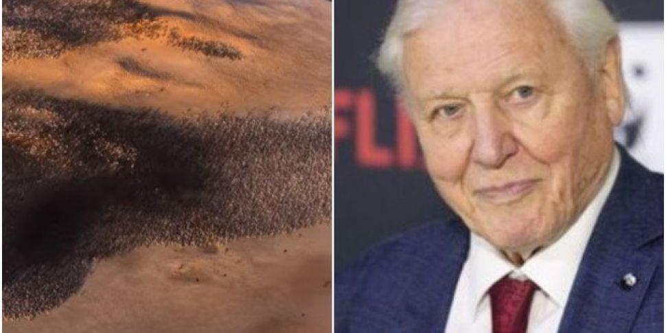 David Attenborough Has A New N...