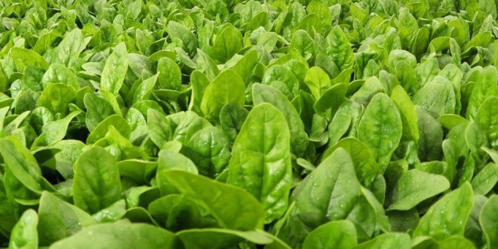 Spinach Recalled Over Contamination Fears