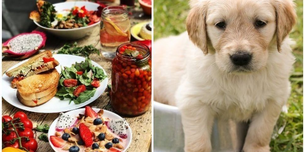 'Doggo & Me' Bottomless Brunch Taking Place In Dublin This Month