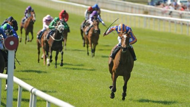 Betting 2000 guineas field binary options signals for nadex binary