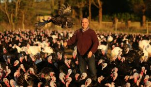 Turkey Farmer Says Customers Not In A Flap Over Christmas As Orders Rise