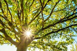 Five Trees You Can (And Perhaps Should) Plant In Your Garden