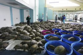 Thousands Of Sea Turtles Rescued Amid Cold Snap In Texas