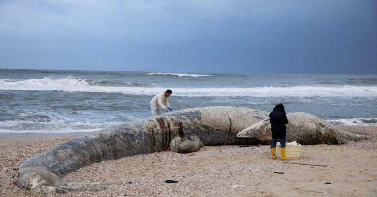 Israel closes Mediterranean shore after oil devastates coast