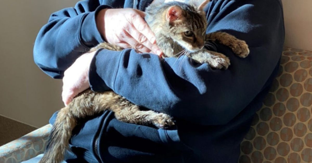 LA cat reunited with owner after going missing for 15 years
