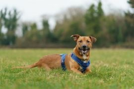 Dogs Trust Received 172 Requests To Surrender Dogs After Christmas