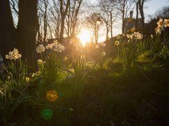 12 Small Joys Of The Clocks Springing Forward