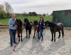 Ponies Held At Belfast Port Over Brexit Paperwork Released Home