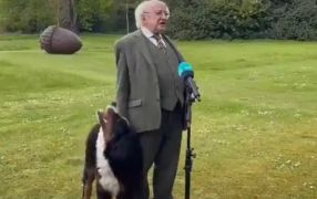 President Higgins' Puppy Goes Viral As He Tries To Get Owner's Attention During Interview