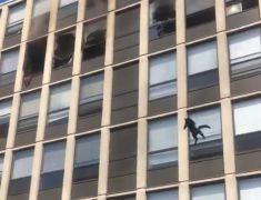 Cat Wows Onlookers By Jumping From Burning Multi-Storey Building