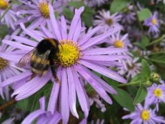 How To Help Bees All Year Round – Not Just On World Bee Day