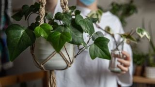 Should You Play Music To Your Plants? It Turns Out There May Be Benefits