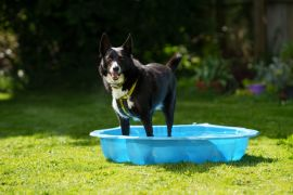 Protect Dogs From Hot Weather Dangers, Charity Warns