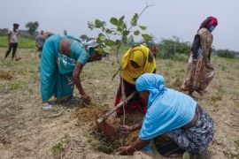 India Planting 250M Saplings In Fight Against Carbon Emissions