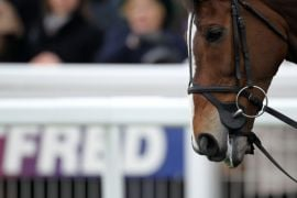 Urgent Meetings In Horse Racing Industry After Investigation Into Slaughterhouses