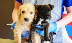 Ireland Being Used To Smuggle Puppies Into Britain, Seanad Hears
