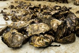 Plastic Build-Up In Seafood May Be Underestimated, Study Suggests