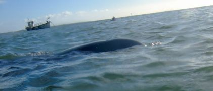 Public Urged To Keep Distance From Dolphin Finn Living In Carlingford Lough