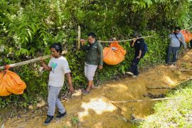 Three Endangered Sumatran Tigers Found Dead In Indonesian Forest