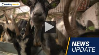 Video: Kerry Tragedy, Confidence In Coveney And Fire-Fighting Goats