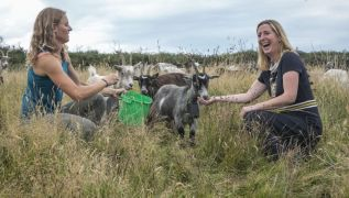 Irish Goats Deployed To Protect Howth From Wildfires