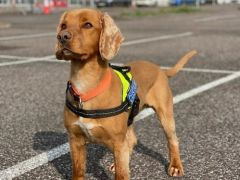 Detector Dogs Maggie And Wilson Uncover 300,000 Cigarettes In Bags At Dublin Airport