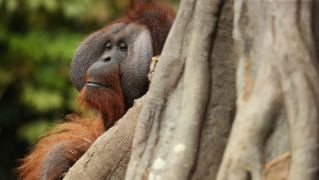 Dublin Zoo To Re-Invent Itself As A Zoo-Based Conservation Organisation
