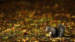 Met Éireann Says 'Very Mild' Autumn Weather Set To End On Thursday